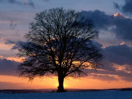 Soleil derriere arbre