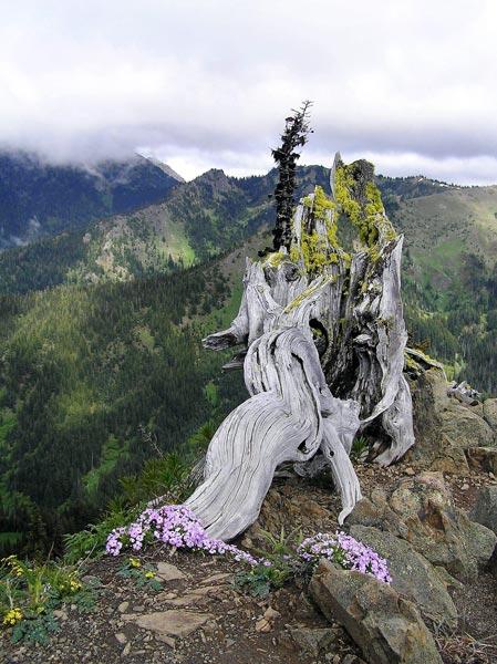Tronc arbre momie