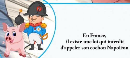 Cochon napoleon